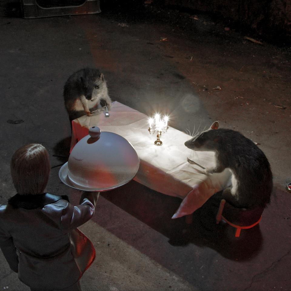 Ratten04